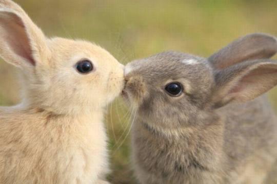 2 bunny (kuning & coklat)